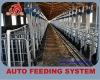 High quality pig farm chain feeding system