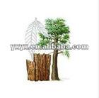 Natural Yohimbe Bark Extract 98%min