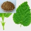 Chinese Lemon Balm Extract Rosmarinic acid 3% 5%