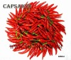 Natural Capsaicin 95% HPLC,extracted from natural chilli