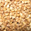 Roasted buckwheat kernel New crop