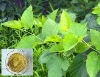 mulberry leaf extract powder (DNJ 1%~20%)