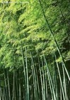 bamboo poles/chinese bamboo factory