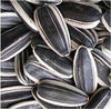 high quality sunflower seeds, variety 5009