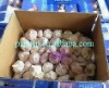 Chinese new crop normal white garlic in Pizhou
