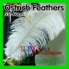 BEST Wedding Centerpieces Selected Prime Quality 22-24inch(55-60cm) Wholesale White Ostrich Feathers