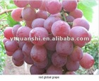 2012 New Season Red Grape in China