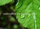 High Quality 1-Deoxynojirimycin (DNJ) from Mulberry Leaf Extract