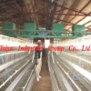 chicken layer battery cage system