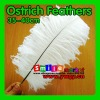 Factory Wholesale 100% Exporting 35-40cm with Various Colors Ostrich Feather for Party Wedding Centerpiece Decoration