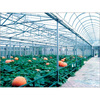 polycarbonate anti-fog sheet for green house