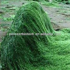 Spirulina powder bulk stock, worldwide fast delivery