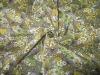 2012 hot sale woven100% polyester kose Bao printing silk