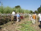 sugarcane harvester in India Demo