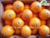 2012crop Fresh navel orange