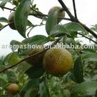 25kg Camellia Seed Oil Food Grade,(Camellia Oleifera), Camellia Seed Carrier Oil,Camellia Oleifera Seed Oil, CAS 225233-97-6