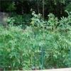 Harmless plastic gardening nets