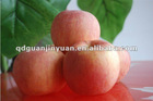 2012 new saeson yantai fuji apple