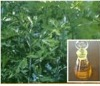 100% pure natural plant extract dalbergiae odoriferae essetnial oil with high quality and reasonable price