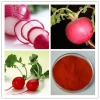 Pure natural red radish Extract - radish red color