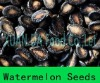 Sell Black middle melon seeds in bulk with the most competitive price