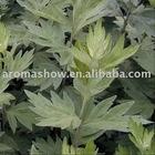 100kg Absinthe Essential Oil (Artemisia absinthiuml), CAS 8008-93-3, FEMA 3116