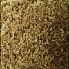 Cumin Oleoresin for food flavor
