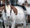 farm guard field fence