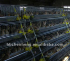 Welded Quail Cages in Farming