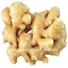 2011 new crop ginger