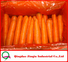 "JQ ""Carrot Price"" Chinese Fresh Carrot / Fresh Garlic / Fresh Ginger / Fresh Onion / Fresh Potato Supplier"