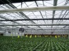 High-grade agricultural polycarbonate sheet greenhouse