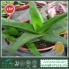 Aloe vera L.var.chinensis(Haw)Berger Extract