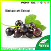 100% natural Black Currant Extract