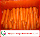 "JQ ""Carrot Price"" 2012 Chinese fresh vegetables baby carrots 2012"