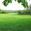 garden green lawn