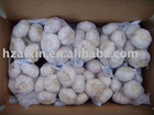 New crop fresh garlic are avlailable
