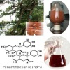 95% Proanthocyanidins 80% Polyphenols Pine Bark Extract