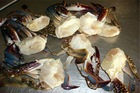 swimming crab(half cutting)