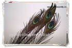 Top quality length eye-width 3cm beautiful natural peacock feather