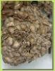 maitake mushroom extract,reishi mushroom extract