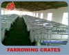 Galvanized pipe new style sow farrowing pen