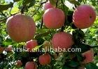 Best red fuji apple/fresh red fruits/organic fuji apples Hot SALE apple