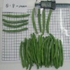 IQF Frozen Green Bean