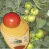 Humidity tolerance tomato seeds --big red tomato seeds