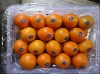 Chinese most competitive citrus fruit -navel orange