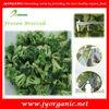 IQF broccoli/frozen broccoli