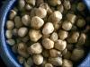 Straw mushroom in brine