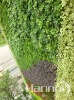 Green vertical garden