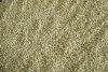 2012 crop Inner Mongolia Buckwheat kernel